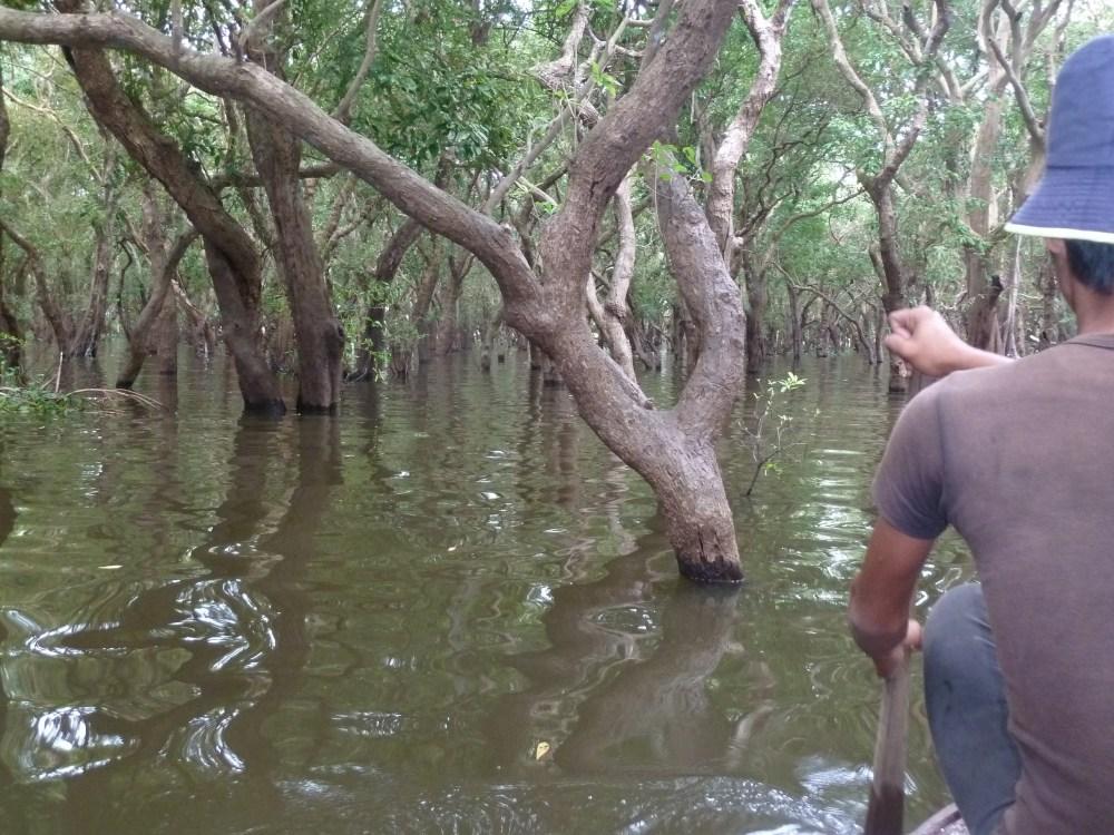 In einer Nussschale durch den Mangrovenwald