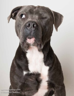 Pete - foster to adopt
