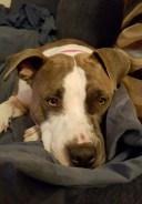 Sophia snuggle