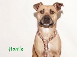 Harlo