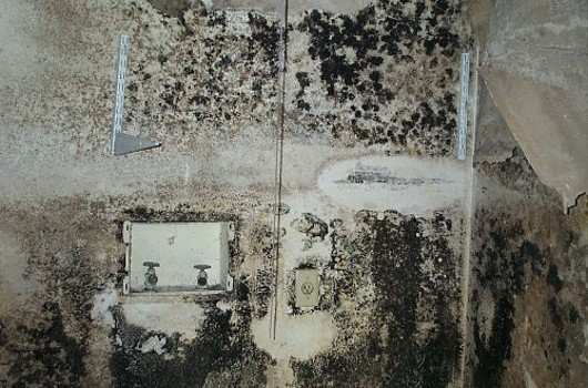 Mold photo in Laundry Room - photo from an appraiser friend