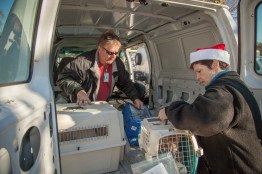 Staff loads animals into vans for transport to the airport.
