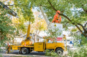 Urban Forestry tree pruning