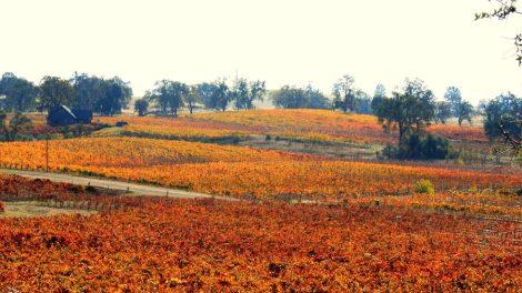 Screw ALS Winery Tour: Season-Long Passport Promotes Good Cause