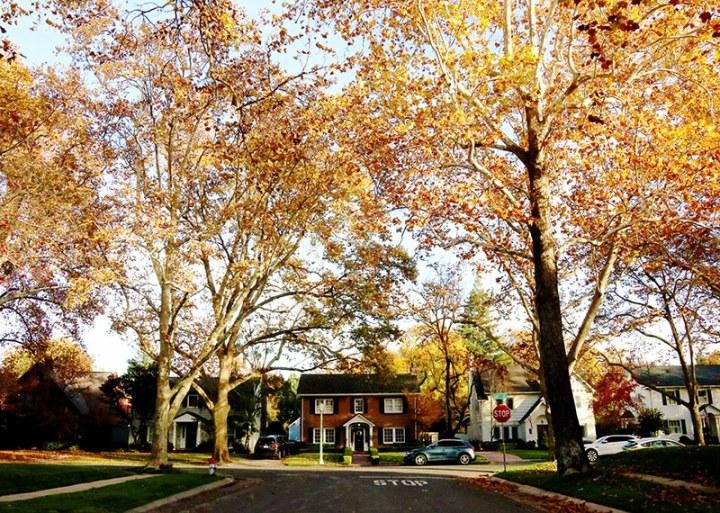 Fall in Sacramento 2017 26 720x513 - Sacramento: Best City in California for Fall Colors?