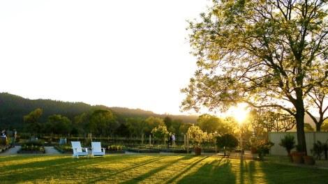 Golden Sunset Over Napa - Dine & Wine