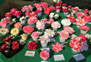 Picture of Camellias at Sacramento Camellia Show