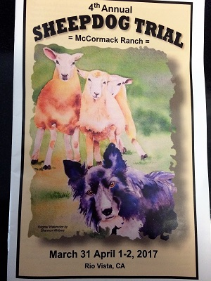 Picture of McCormack Ranch Sheepdog Trial Program