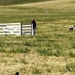 4th Annual McCormack Ranch Sheepdog Trial (Part 2 of 2)