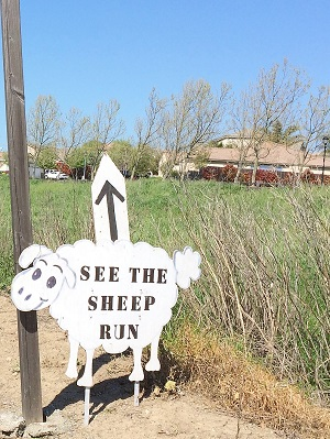 Picture of sheepdog trial sign