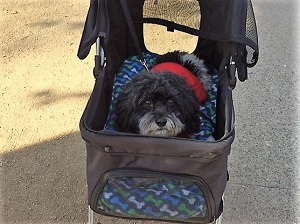 Picture of Mickey at Sacramento Walking Sticks New Year's Day walk