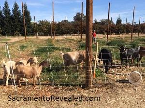 Photo of GoatHouse Brewing Company Goats