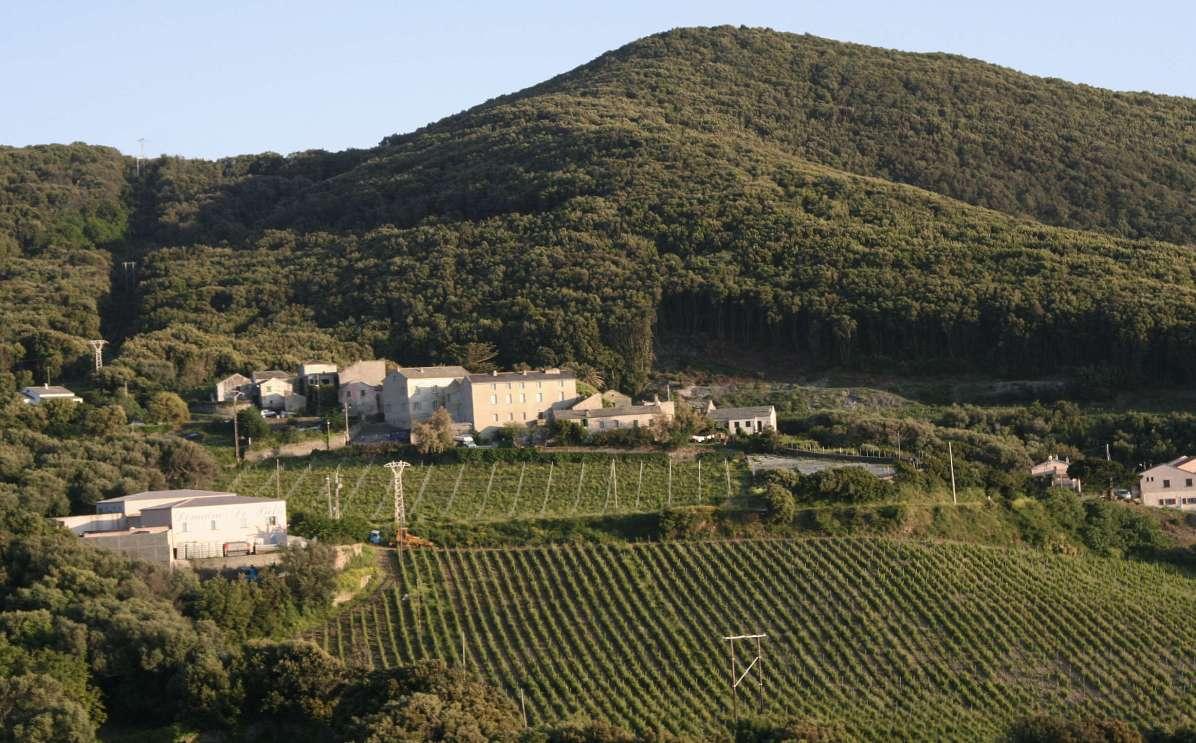 Sacré Cap Corse - Culture de la vigne à Morsiglia