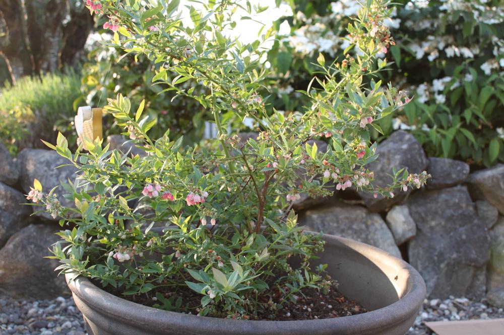 garden update (1/6)