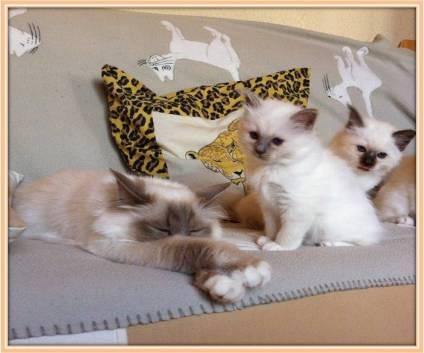 Le sommeil du chat et du chaton