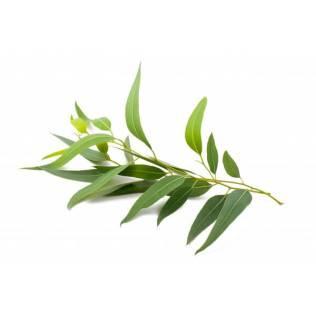 EucalyptusRad