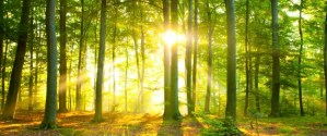 reforestation and forest conservation