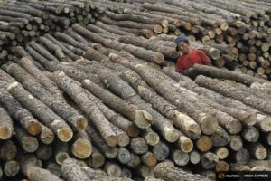 China deforestation