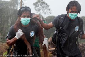 orangutan conservation