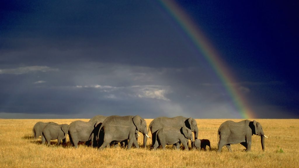 elephant conservation Africa