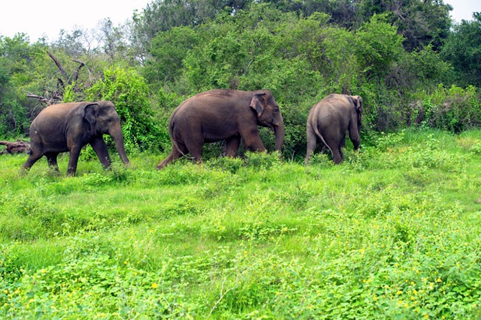 forest conservation India