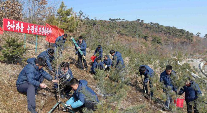 North Korea reforestation