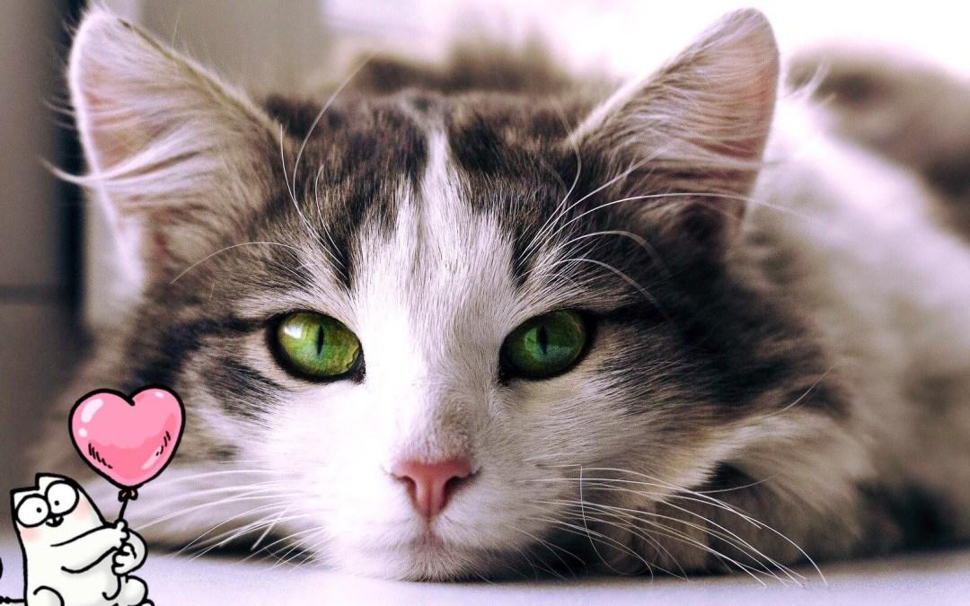 In cosa consiste la visita dal Veterinario per il tuo #Gatto?