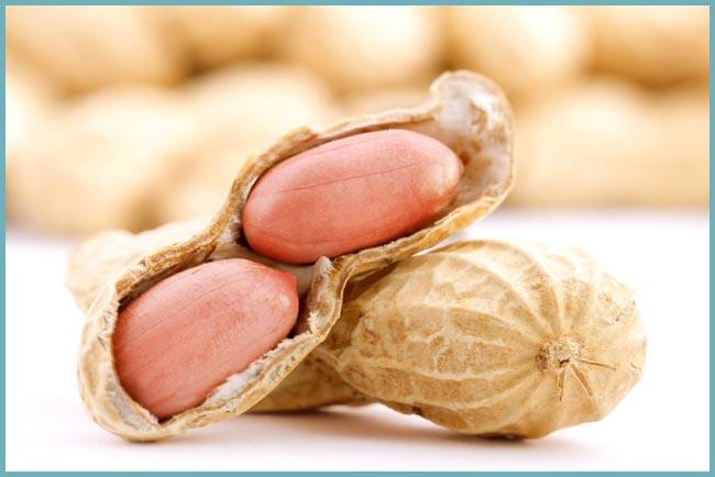 Как называется дерево на котором растет арахис. Особенности выращивания арахиса. Как правильно выращивать земляной орех
