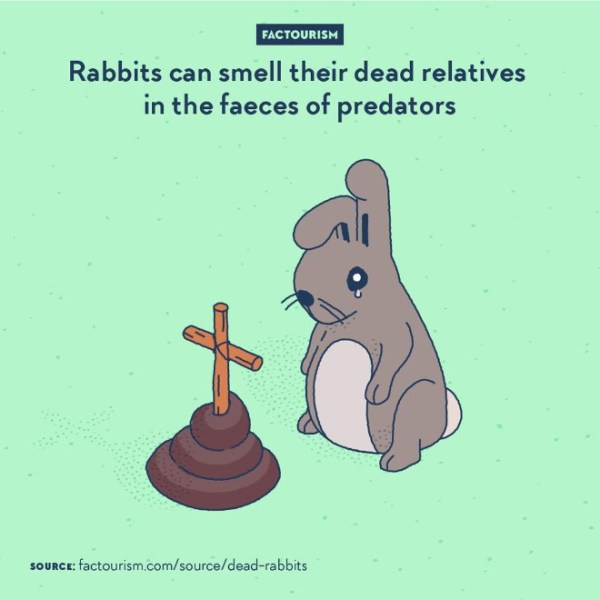 Not only rabbit can recognise the smell of faeces of known predatory species, but it has been found that they are also able to distinguish the ones that has specifically been eating other rabbits. If an area houses an animal a little too fond of eating rabbits in the near past, then it is probably best to avoid this place for a while.⁠