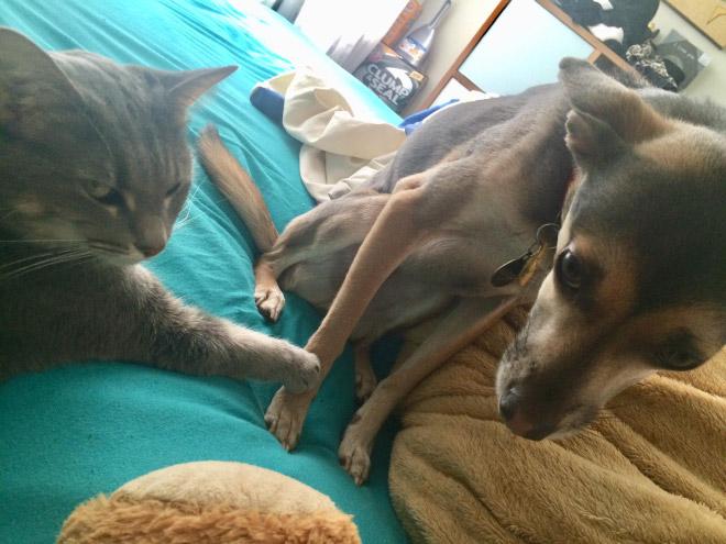 Terrified of cat.
