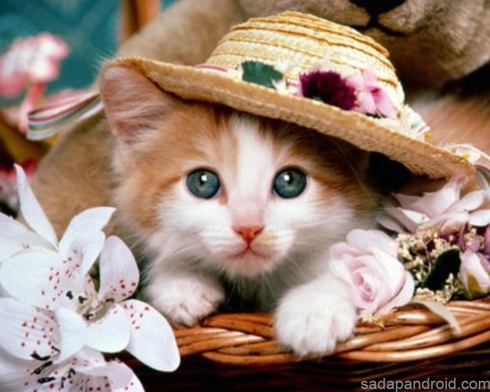 Gambar Kumpulan Gambar Kucing Berupa Kata Lucu Terbaru