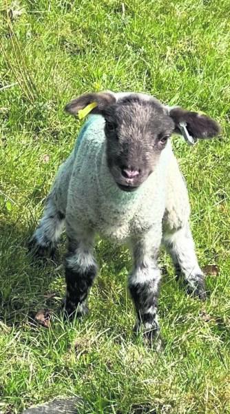 4221 Saddleworth Captured - Margaret Henshaw