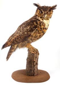 Eagle Owle_1937.17
