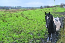 Knowls Lane horse