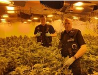 Arrests have been made after an estimated £1.1 million worth of cannabis was seized