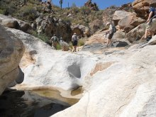 If you're new to hiking in Arizona, the SaddleBrooke Hiking Club has a program just for you!