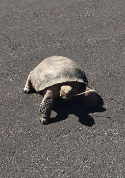 Tortoise photo by Paul Arnett