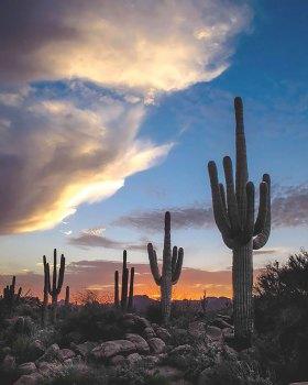 Sunset and Saguaros, photographer Jim Eaton. undefined