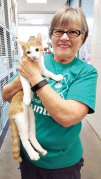 Every other Saturday, Marian Bianchini helps at the Pima Animal Care Center, providing animals with opportunities for socialization, exercise and positive stimulation.