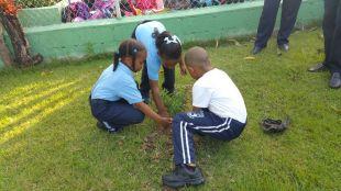 los-de-basica-sembrando-la-flor-nacional-2017