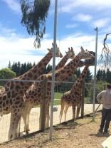 Hamilton Zoo