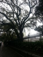 Mossy Trees Jackson Square
