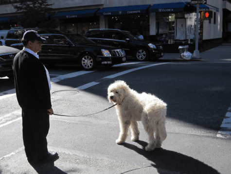 Man with a big dog on a New York street