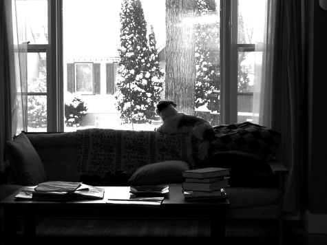 Sadie Shih Tzu lying on the back of the sofa looking out at the snow