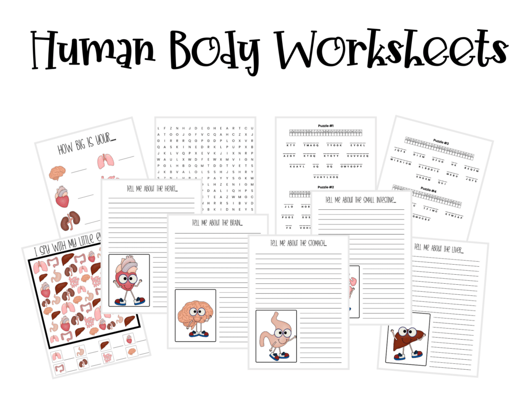 Human Body Unit Study Free Printables