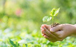 Tenemos Ley de Educación Ambiental