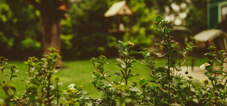 Prace ogrodowe w maju. Przygotuj się już teraz