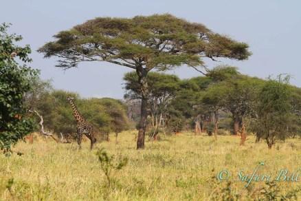 Landscape, Tarangire National Park, Tanzania