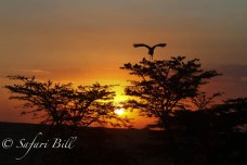 Sunset, Serengeti National Park, Tanzania