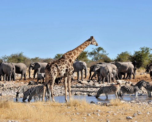 Ruta del Okavango